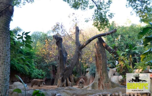 Entrada a Bioparc Fuengirola al mejor precio hasta final de año