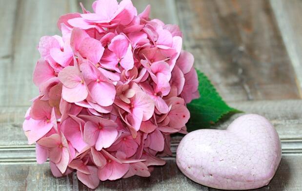 Regala flores a un precio fantástico