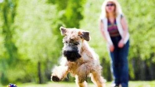 Descuento en el test de Leishmania o Filariosis y vacunas caninas
