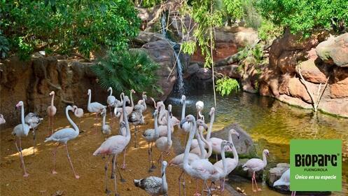 Entrada a Bioparc Fuengirola al mejor precio